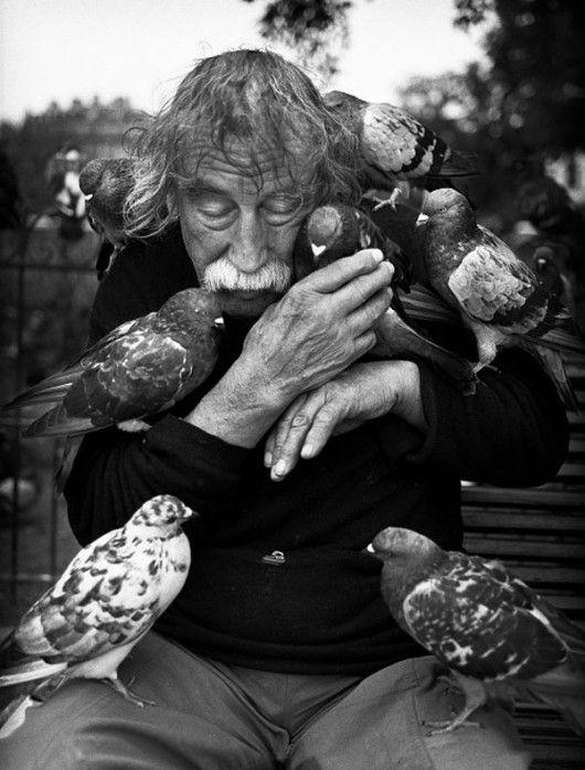 Žedne mi ptice, bratanac…