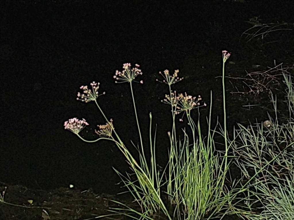 24 cvet na vodi
